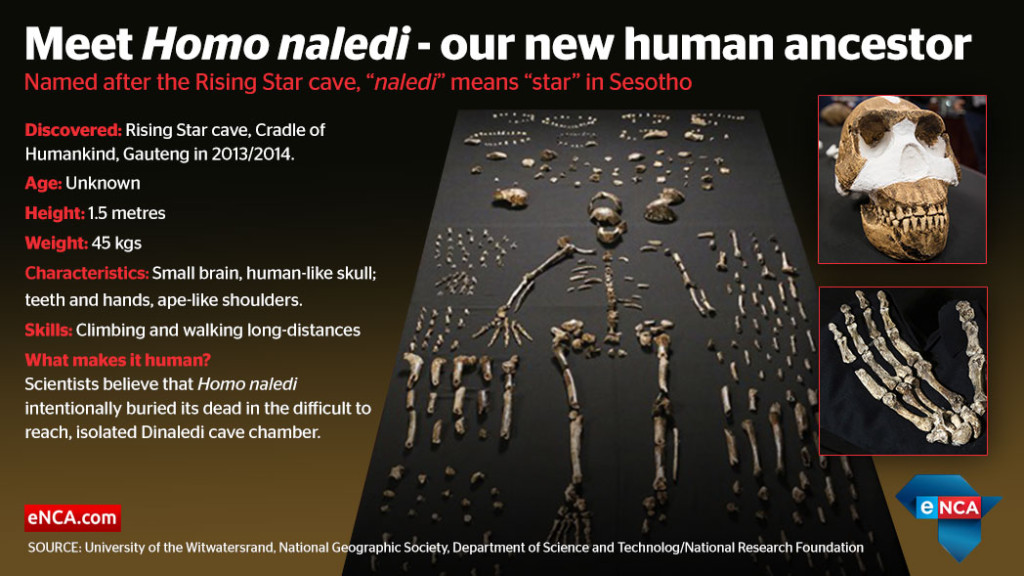 web_infographic_homonaledi